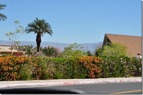 Living Desert, Ca 134