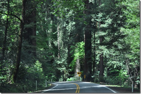 Drive to Crescent City, Ca 131