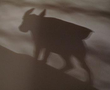 donkey_shadow_resize