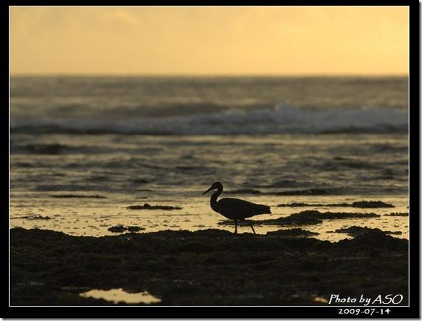 岩鷺(2009-07-15綠島)1394