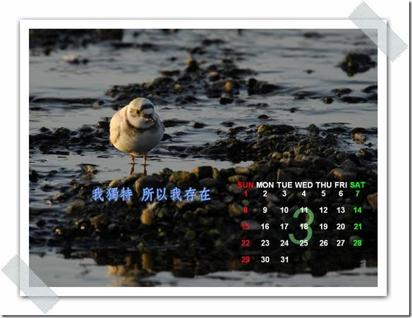 3月  白化症小環頸(攝於  花蓮美崙溪)