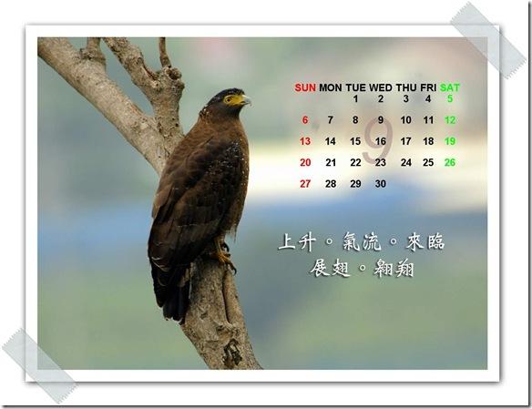 9月  蛇鵰(攝於 花蓮楓林步道)
