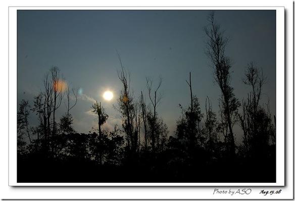 豐濱鄉造林地0558