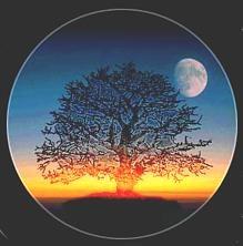 Magickal Reveries Cover