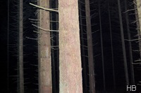 Morgendlich-dunkler Wald bei Warstein © H. Brune