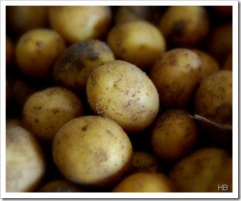 Kartoffeln © H. Brune