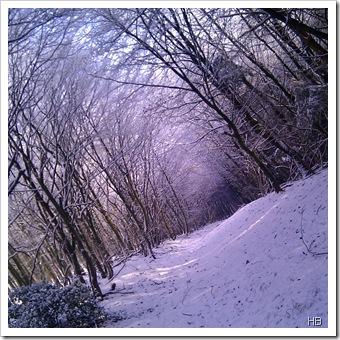 Teutoburger Wald im Schnee © H. Brune