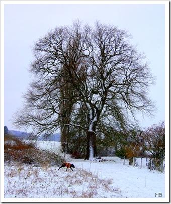 Schneelandschaft © H. Brune