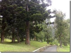 cibodas garden 08202008669
