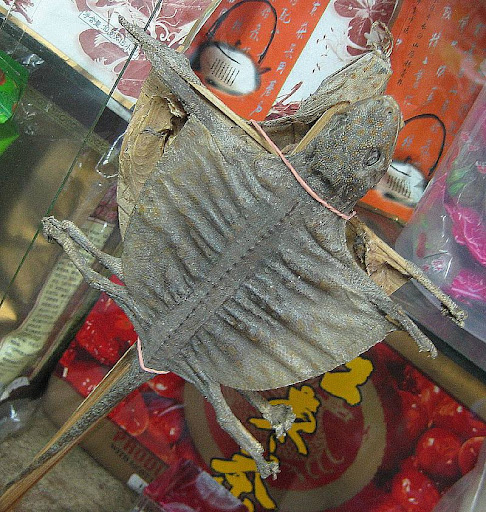 a pair of dried geckos used in Traditional Chinese Medicine