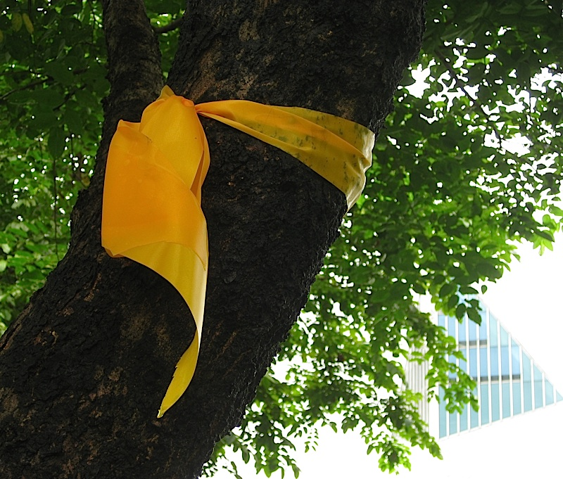 yellow ribbon for Corazon Aquino around a tree in front of the Ateneo Church of the Gesù