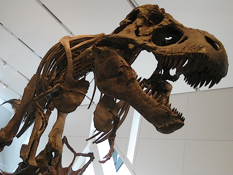 Tyrannosaurus rex skeleton at the Royal Ontario Museum