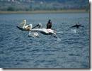 Lago di Prespa 2