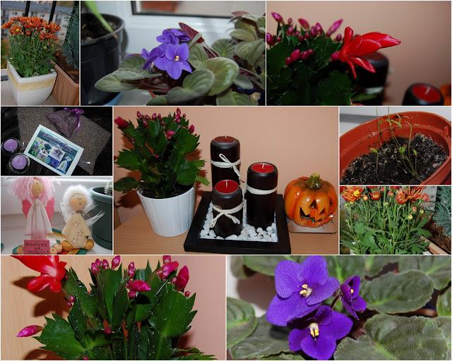 kwiatki jesienne