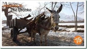 brooke donkey