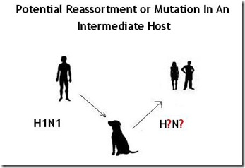 reassortment in a host