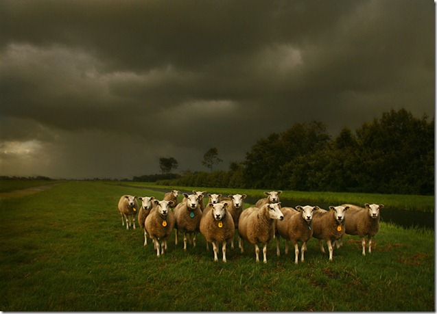 Rain over the Sheeps by b.neeleman