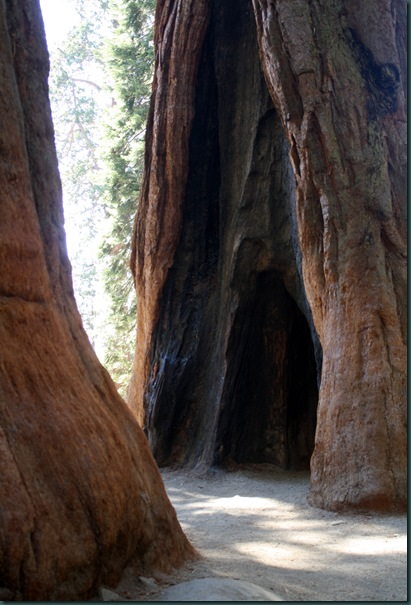 Sequoia National Park 160