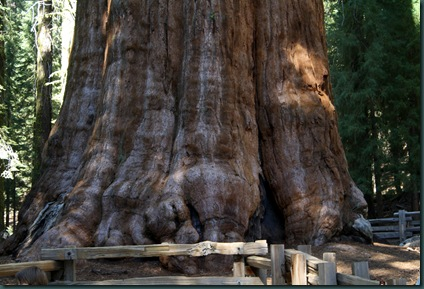 Sequoia National Park 168