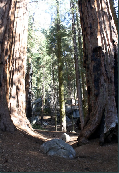 Sequoia National Park 235