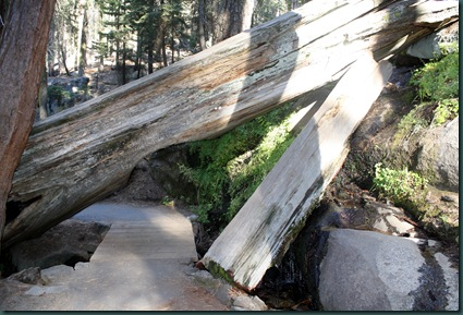 Sequoia National Park 247