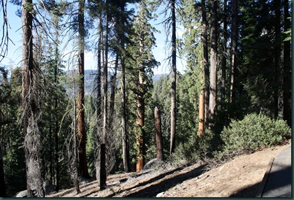 Sequoia National Park 256
