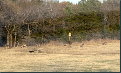 Deer and Jana Snow Ball 011