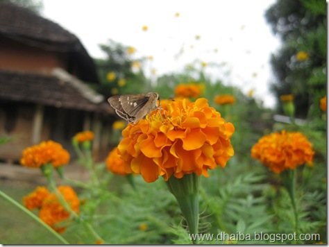 Flower--Udayapur'67