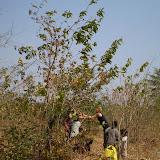 Zaden van bomen verzamelen