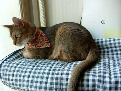 창밖을 바라보는 고양이 바토 [고양이,고양이키우기,고양이집사,반려묘,cat]