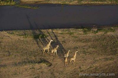 Africa-amarjits-com (23)