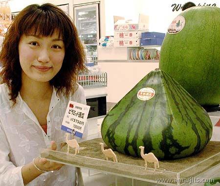 watermelonfun36mc9