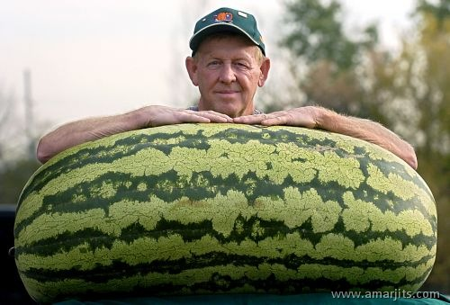 Watermelon-Fun-amarjits-com (8)