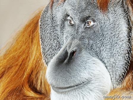 amarjits-com-Animal-Pics (18)