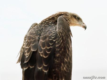 amarjits-com-Animal-Pics (3)