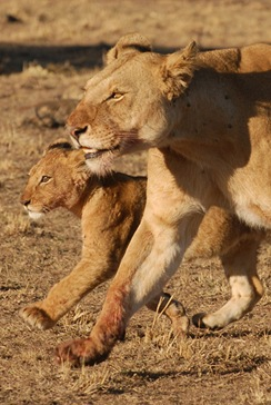 tailend&cub
