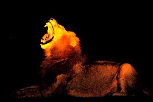 [night roar[6].jpg]
