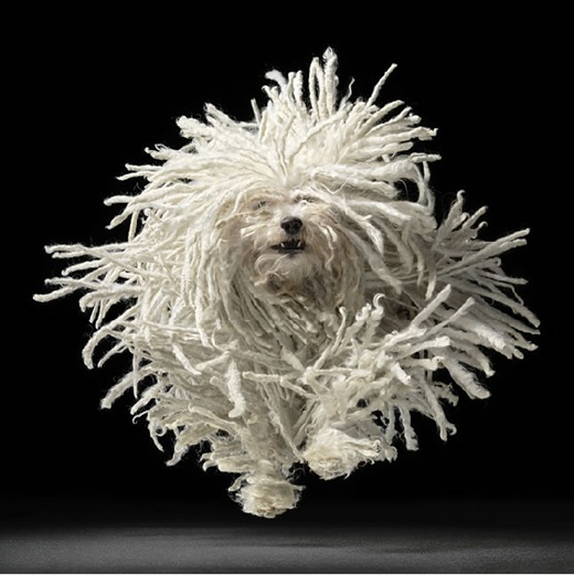 Tim Flach - Dogs