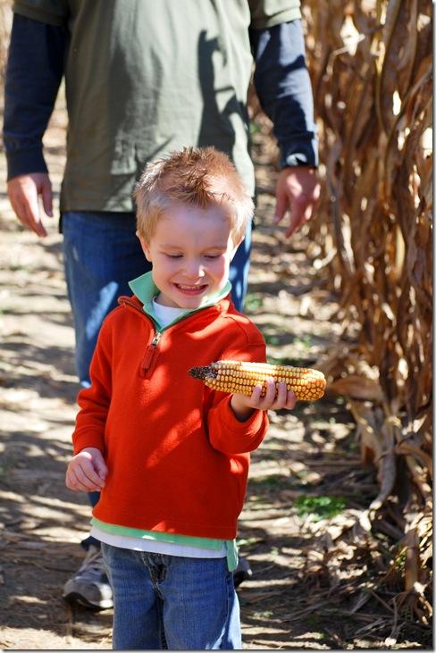 corn maze3 (1 of 1)