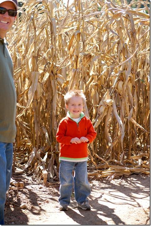 corn maze1 (1 of 1)