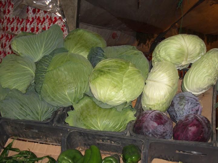 Краснозем долины Бекаа позволяет выращивать чистые овощи. Ливан. Фото Е. Есина