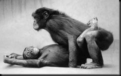 bonobo1233177386