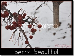 Berry Beautiful CP