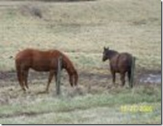 both horses in field
