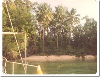 3 palm cove