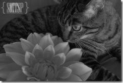 melvinflower1