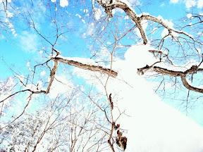 まだまだ上にはたくさん枝が…。