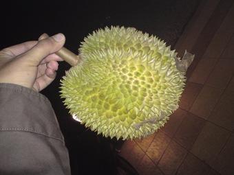 Nih dia buah itu..