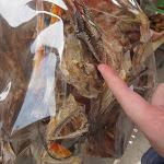 Exotische Meeresfrüchte in Tai O