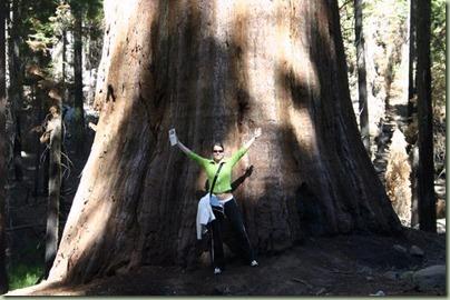 13 - En gigantisch grote Sequoia-bomen van meer dan 2000 jaar oud